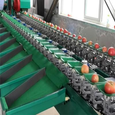 西红柿分选神器 番茄挑选小助手 为您量身定制的水果分级机